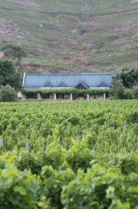 glenwood wine estate robertslvei franschhoek sonia cabano blog eatdrinkcapetown