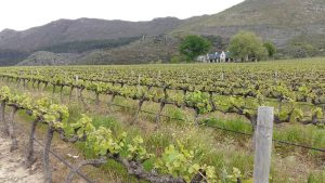 glenwood wine vineyards rendezvous bistro franschhoek sonia cabano blog eatdrinkcapetown